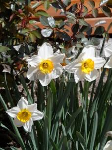 草丛中的花朵