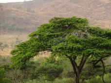 丘陵和树木