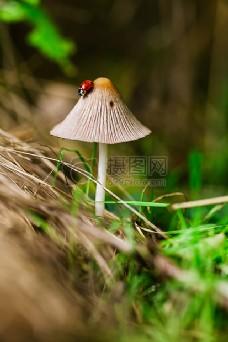 伞形状的蘑菇