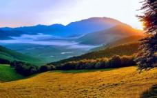 高清墨尔本远山树林风景图片素材