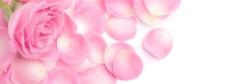 香水粉色玫瑰背景