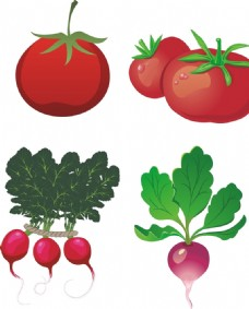 西红柿 红萝卜