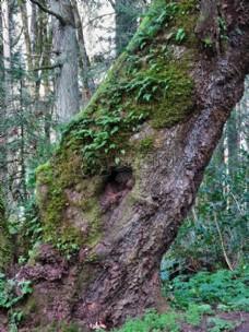 森林中枯枝上的苔藓