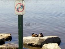不要喂鸭子