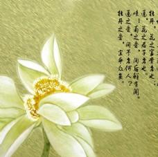 手绘莲蓬 荷花