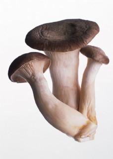 新鲜蘑菇摄影图片