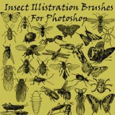 昆虫苍蝇、蚊子、蝴蝶PS笔刷