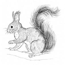 素描树上的松鼠