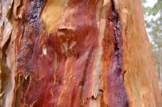 红胶bark.JPG