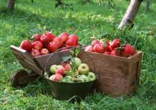 新鲜苹果高清摄影图片图片