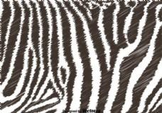 黑白斑马背景