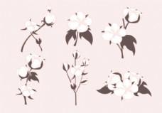 棉花植物载体