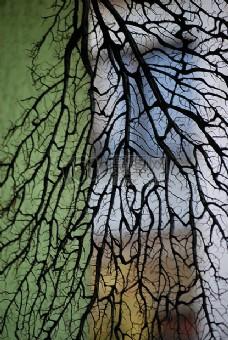枯枝满布的冬天