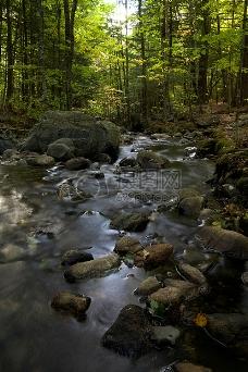 水,岩石,树木,叶子
