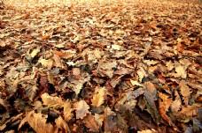 autumn_leaves2.jpg