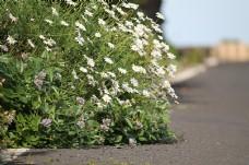 草丛中的白色花朵