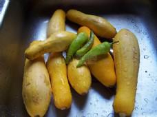 水池里的瓜类