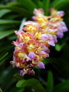 盛开的美丽花朵