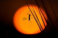月光下的蝗虫
