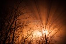 自然,阳光,树木,树枝,射线,中,阳光,橙色