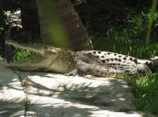 可怕地鳄鱼