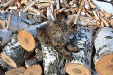 木头上的猫咪