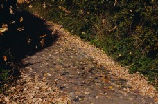 道路,路径,方式,叶,叶子,秋天,叶子,轨道,卵石,鹅卵石