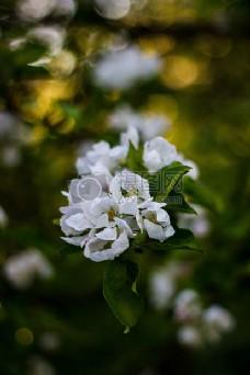 花,叶,白,植物,盛开