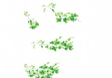 树枝树叶落叶
