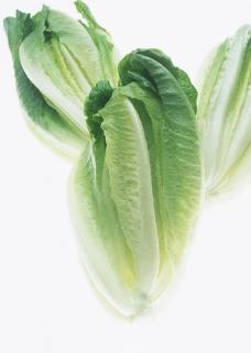 新鲜生菜摄影图片