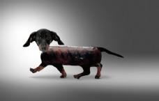 腊肠狗创意调色完整修图设计