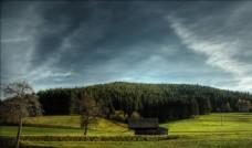 乌云压顶下的绿树林