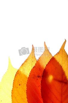four_leaves_up.jpg