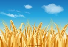 自由小麦秸秆矢量景观