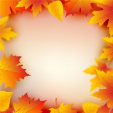 秋天树叶背景边框图片