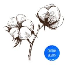 纯棉标志设计图片