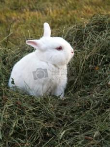 草丛中可爱的兔子