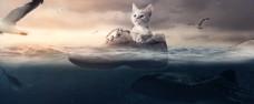 乘鞋子环游大海的小猫咪