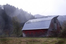 森林,农村,农场,草原,古老的,抛弃,谷仓,森林