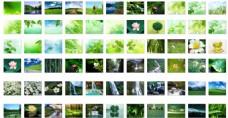 夏季绿色壁纸图片