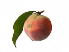 一颗带叶子的桃子