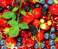 多种水果集图片