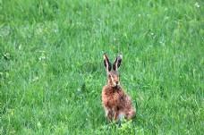 草地上可爱的兔子