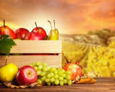 秋天背景和水果图片