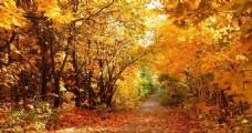 秋叶满天飞