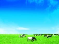 蓝天白云草地牛羊