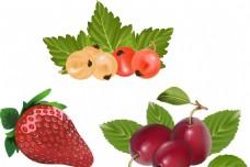 草莓 李子