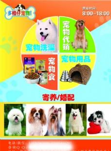 宠物传单宠物海报模板