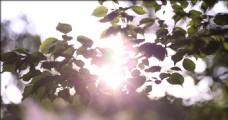 阳光树叶视频素材