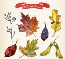 彩绘秋天树叶设计矢量素材